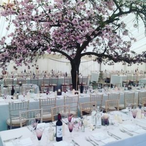 Marquee with blossom tree